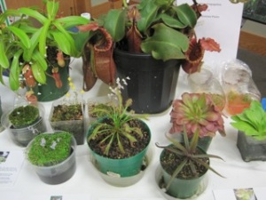 UMCPS display plants MN Arbo 2012