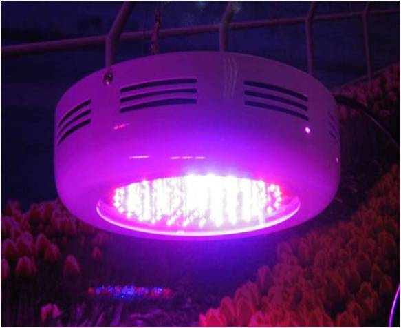 LED grow fixture