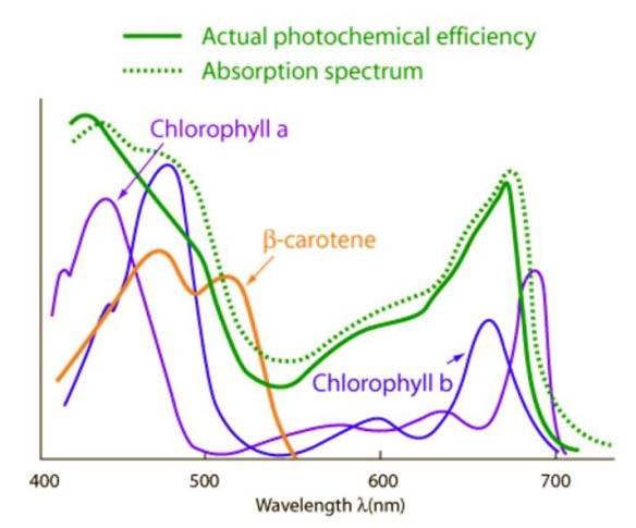Photosynthetic Pigments